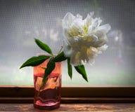 The Peony Flower. Still life. On the balcony window stock photography