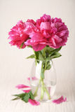 Peony flowers Royalty Free Stock Images
