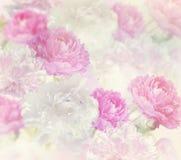 Peony Flowers Background Stock Image