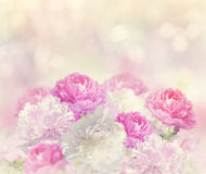 Peony Flowers Background Stock Images