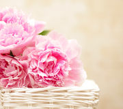 Peony flowers - background in Victorian style. Peony flowers - background in the Victorian style Royalty Free Stock Photography