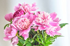 Peony flowers bouquet. Springtime fresh natural composition Stock Photo