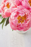 Peony flowers Stock Images