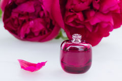 Peony flowers fragrance Stock Images