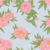 Peony flowers and leaves. Vector illustration Stock Image
