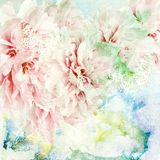 Peony flowers on painted background Royalty Free Stock Photography
