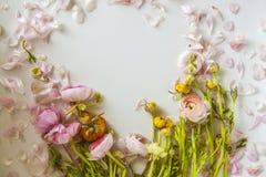 Peony flowers and  Peony petals Royalty Free Stock Photo