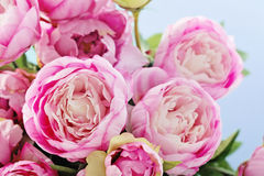 Peony flowers. Pink peony flowers on blue background Royalty Free Stock Photography