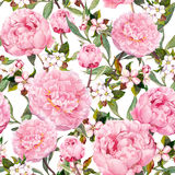 Peony flowers, sakura. Floral seamless background. Watercolor. Peony flowers, sakura. Floral seamless background watercolor pattern Stock Image