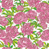 Peony flowers seamless vector pattern. Vector seamless wallpaper pattern with pink peony flowers Stock Images