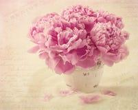 Peony flowers Stock Image