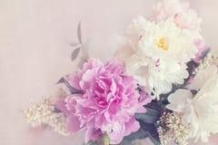 Peony flowers vintage card Stock Photos