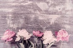 Peony Flowers on Vintage Wooden Boards Stock Photography