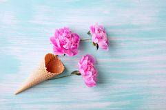 Peony flowers in the waffle cone. Creative design.  royalty free stock image