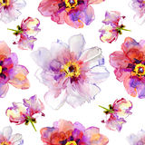 Peony flowers. Watercolor illustration. Royalty Free Stock Image