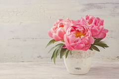 Peony flowers. In a white vase Stock Photos
