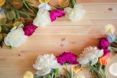 Peony flowers on wooden background with copy space for greeting message. Red and white peony flowers on wooden background with copy space for greeting message stock photo