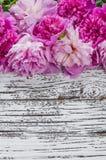 Peony flowers Stock Photos
