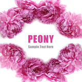 Peony frame Royalty Free Stock Images