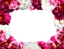 Peony frame Stock Photography
