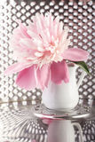 Peony in future Royalty Free Stock Image