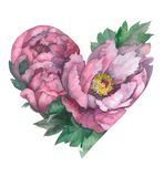Peony heart. Love. Valentine`s day. Pink Flowers. Watercolor illustration. vector illustration