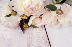 Peony horizontal background Royalty Free Stock Image