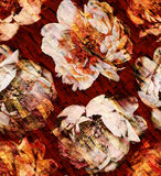 Peony pattern on the texture Stock Images