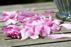 Peony petals Stock Photos