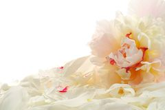 Peony and petals Royalty Free Stock Photo