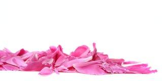 Peony petals Royalty Free Stock Photo