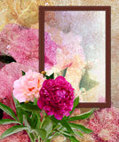 Peony and photo frame Royalty Free Stock Image