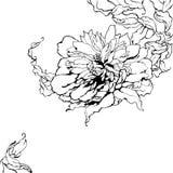 Peony, preto e branco Imagem de Stock Royalty Free
