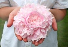 Peony rosado Fotografía de archivo