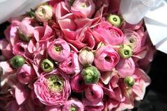 Peony rose Stock Image