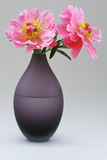 Peony roses on vase. Pink peony roses on violet-colored glass vase half filled with water royalty free stock images