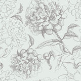 Peony seamless pattern Stock Photography