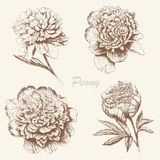 Peony set. Flower set. Vintage peony collection with hand draw floral elements Royalty Free Stock Image