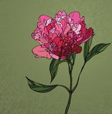 Peony stained glass window Royalty Free Stock Images