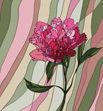 Peony stained glass window Stock Photos