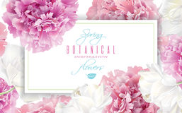 Peony tulip banner Stock Photography