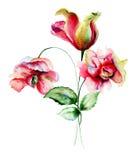 Peony and Tulip flowers Stock Photos