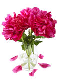 Peony in vase isolated Royalty Free Stock Photos
