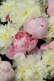 Peony wedding bouquet Royalty Free Stock Images