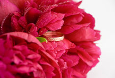 Peony with a wedding ring Royalty Free Stock Photography