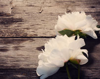 Peony on wooden background Royalty Free Stock Photography