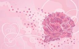 Peony y corazón rosados hermosos Imagen de archivo