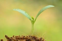 在绿色增长的背景和起点的年幼植物为peop 免版税库存照片