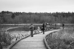 People Activities at Burnaby Lake Public Park B/W stock photos