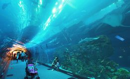 People admire the marine life in the glass tunnel of the Aquarium in Dubai Mall royalty free stock photos